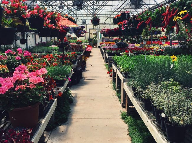 variety-of-flowers-in-a-greenhouse-4032738